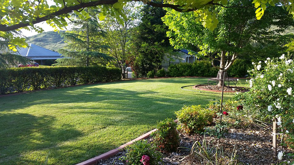 Every garden needs a tree